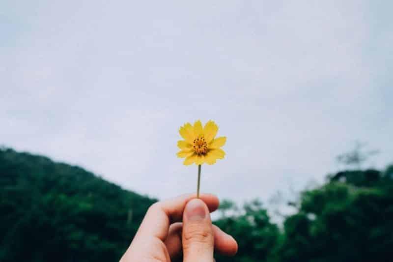 selbstwachstum