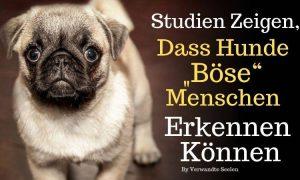 """Studien zeigen, dass Hunde """"böse"""" Menschen erkennen können"""