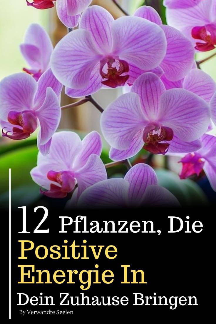 pflanzen positive energie