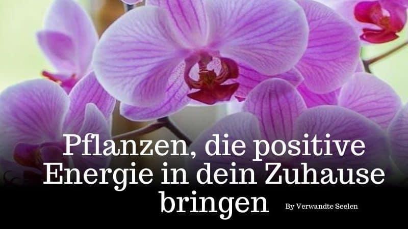 pflanzen für positive energie